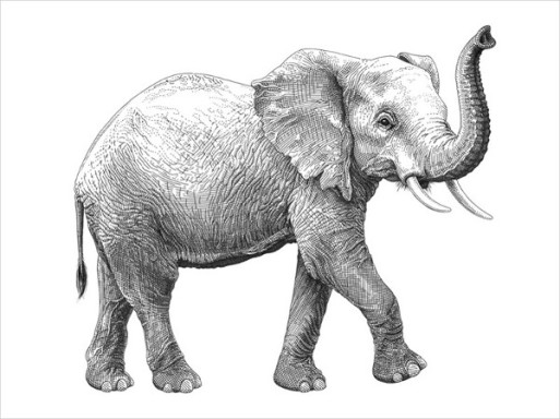 Olivia-Knapp-Elephant-Drawing