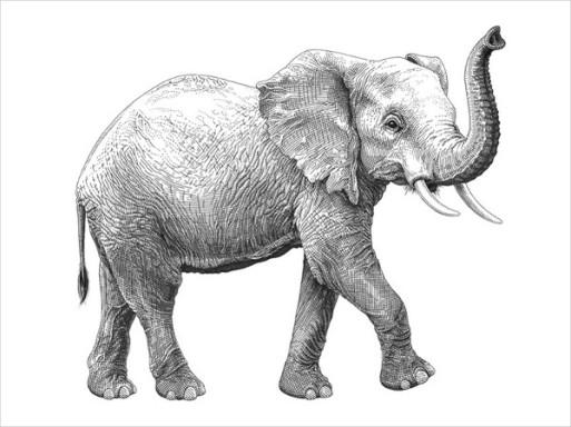 Olivia-Knapp-Elephant-Drawing